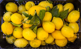 Market Lemons Royalty Free Stock Photo