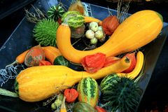 Vegetable abundance Royalty Free Stock Photography