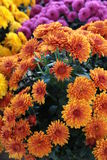 Market Mums Stock Images
