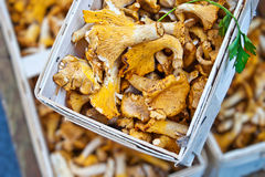 Market Mushrooms Stock Images