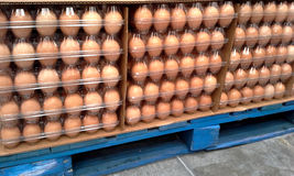 Market: Pallet of Eggs Stock Images