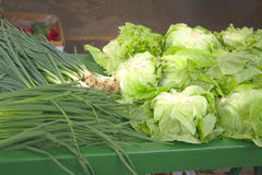 Market place. Fresh green herbs (green salad, onion, radish Stock Photos