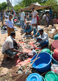 Market place in Sri Lanka. Men sitting on the ground bargaining at dried fish on a market place in Sri Lanka Royalty Free Stock Photo