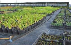 Market of plants Stock Photo