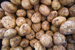 Market potatoes. Wide angle shot of unwashed potatoes at a market Royalty Free Stock Image