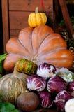 Market pumpkin Stock Image