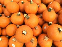 Market pumpkins. Bright orange pumpkins piled together for fall and autumn food, cooking and decorating. Thanksgiving and Halloween are great for a background Royalty Free Stock Images