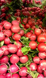 Market: Radishes Stock Images