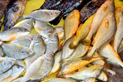 Market raw fish business. Kinds of fish selling in market, shown as different, various and market business dealing Royalty Free Stock Photo