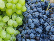 Market red wine grapes Stock Photography