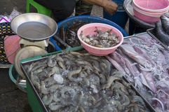 Market seafood shrimp alive stall fish squid concept Stock Photography