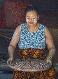 Market in Shan state Myanmar. SHAN STATE , MYANMAR - SEP 06 : Burmese woman selling onion in a market in Shan state Myanmar on September 06 2017. Agriculture is Royalty Free Stock Photography