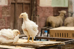 Market in South America. Chickens on a market in South America royalty free stock image