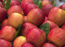 A market stall of apples Stock Images