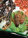 European lobsters bogavante Homarus gammarus, red shrimp Aristeus antennatus and spiny lobsters on the market stall royalty free stock images