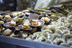 Market stall selling fresh scallops Stock Images