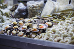 Market stall selling fresh scallops Royalty Free Stock Image