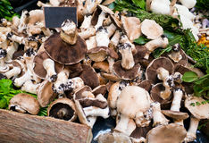 Market stand with fresh mushrooms Royalty Free Stock Photo