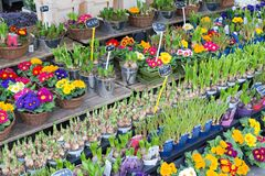 Market stand selling several fresh Dutch flowers Stock Images