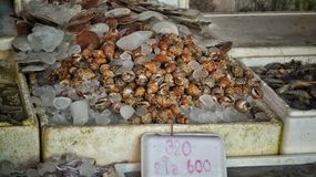 Market in thailand with fishes Royalty Free Stock Image