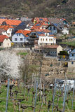 Market town of Weissenkirchen in der Wachau with terraced vineyards in the foreground.  Lower Austria. Stock Image