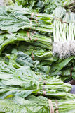 Market Vegetables, Nepal Royalty Free Stock Photo