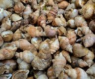 Market whelks Royalty Free Stock Photography