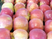 Markham the apples 2016 Stock Image