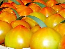 Markham large tomatoes 2017 Royalty Free Stock Photo