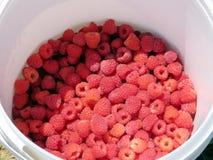 Markham raspberries 2016 Stock Image