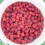 Markham raspberry in the bucket 2017 Stock Image