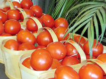 Markham the red tomatoes 2016 Royalty Free Stock Images