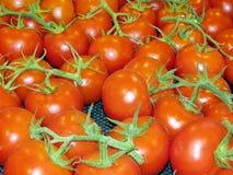 Markham the tomatoes 2017 Stock Photography