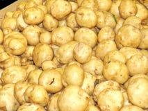 Markham white potatoes 2016 Stock Photo