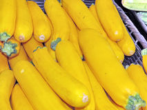 Markham yellow zucchini 2016 Royalty Free Stock Images