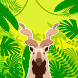 Markhor on the Jungle Background Royalty Free Stock Photos