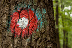 Markier na drzewie Zdjęcie Royalty Free
