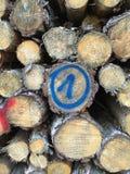 Markierte Stämme des Holzes Stockfoto