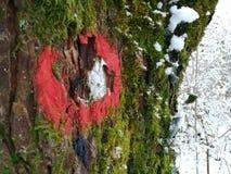 Markierter moosiger Baum stockbilder