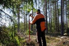 Marking the boundry. A woodman is marking the boundary in the forest Stock Image