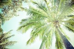 Markis och ormbunksblad av en palmträd arkivfoto