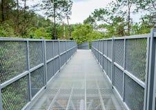 Markisgångbanor eller treetopgångbanor Tidiga gångbanor bestod av broar mellan träd i markisen av en skog; mestadels anknutit upp Arkivfoton