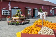 Marknad för Fallskördbönder Royaltyfria Bilder