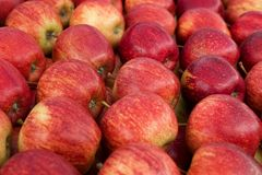 Marknad för gata för friskhet för äpplefruktmat röd Royaltyfri Fotografi