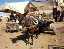 marknad morocco Royaltyfri Fotografi