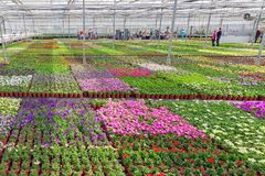 Visitors in greenhouse for cultivation of ornamental plants stock photography