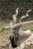 Markor vilar i en zoo royaltyfri bild