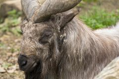 Markor vilar i en zoo royaltyfri fotografi