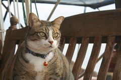 Markotna kot pozycja na drewnie fotografia stock
