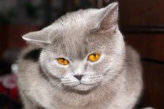 Markotny kot Zdjęcia Stock